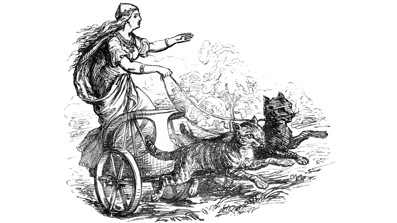 Сильные независимые викинги: почему без котов не обходились даже древние морские путешествия
