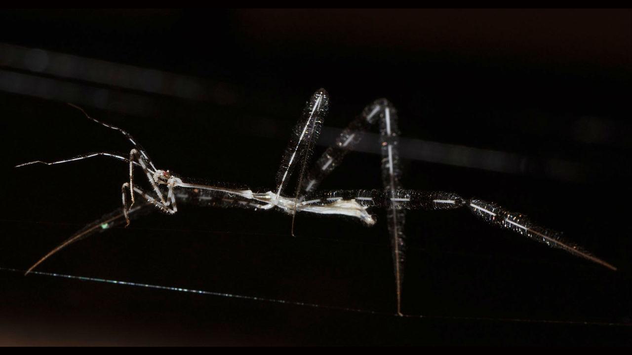 Учёные разобрались, как невидимые убийцы нападают на пауков в их же логове