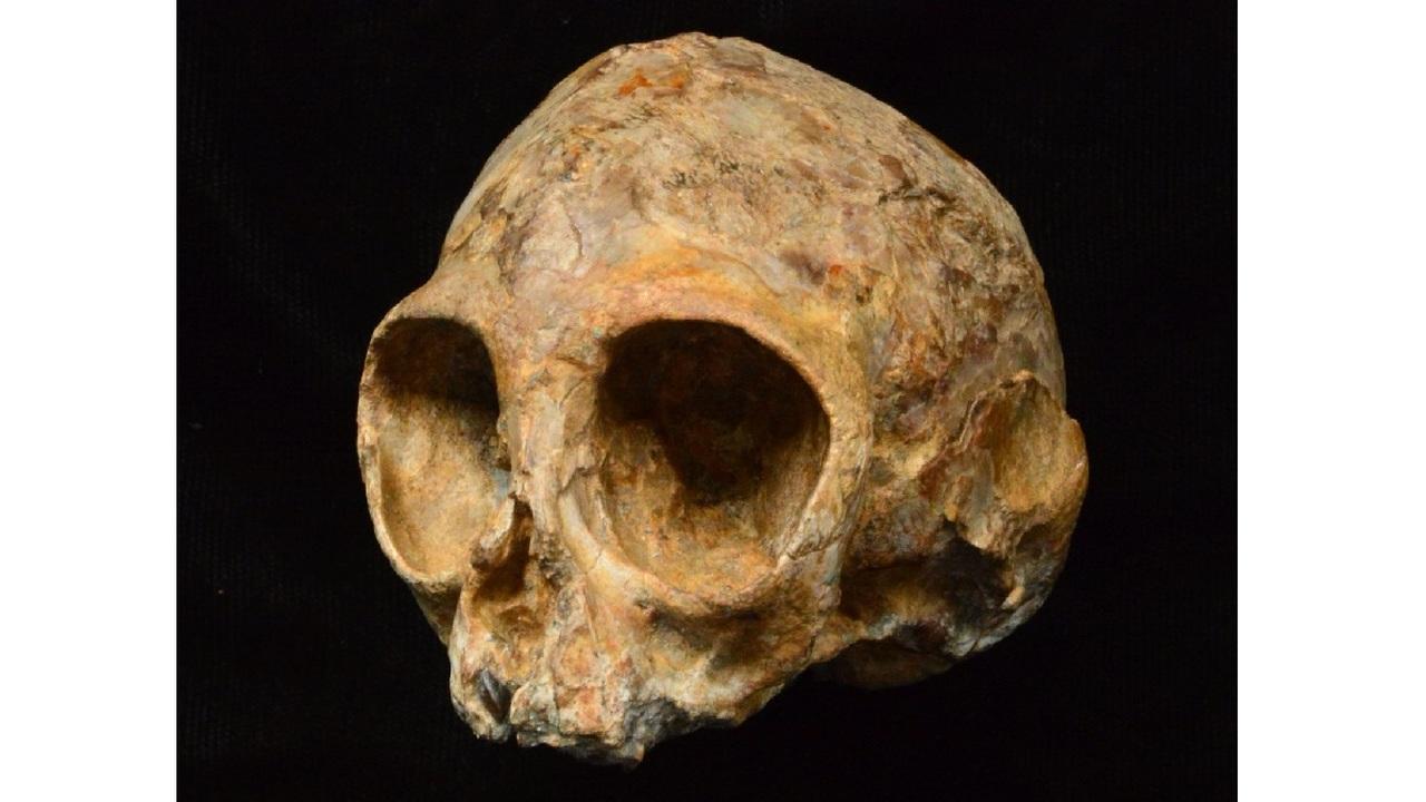 Череп возрастом 13 миллионов лет поведал антропологам об общих предках людей и обезьян
