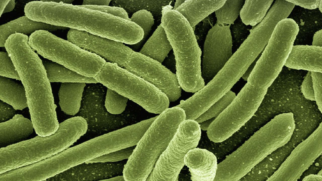 Бактериям подарили возможность надёжно запоминать информацию об окружающей среде