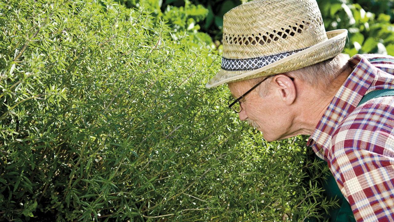 Охотники-собиратели оказались виртуозами в распознавании запахов