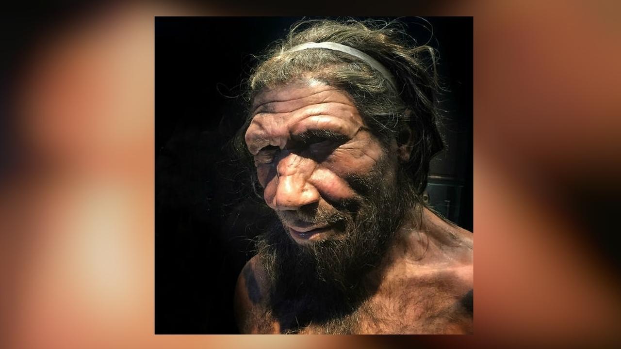 Своих не бросаем: неандертальцам помогало выживать чувство сострадания