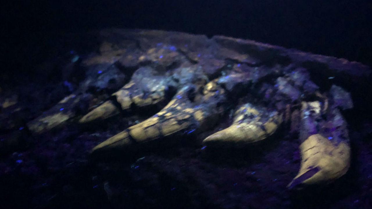 В США откопали детёныша тираннозавра
