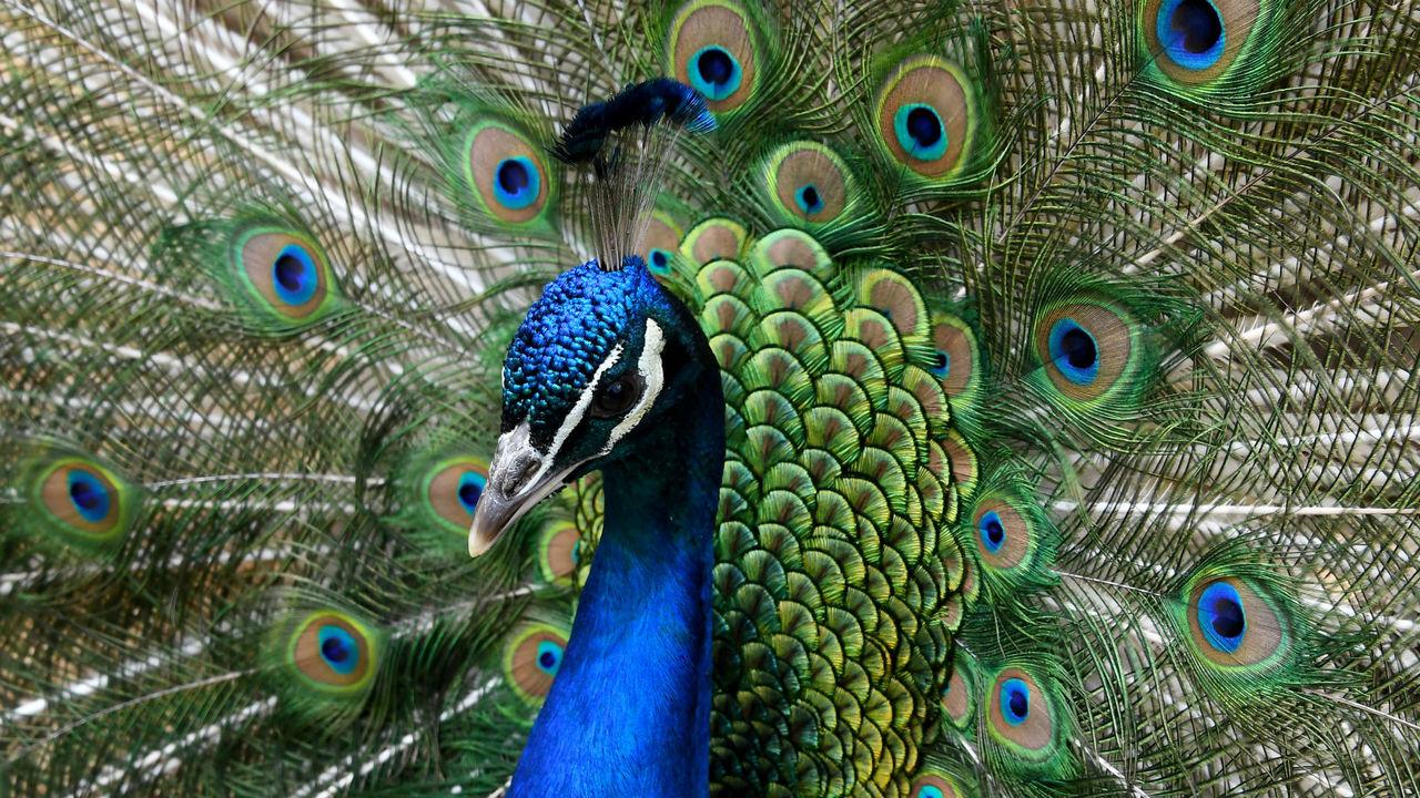 Большая разница между полами грозит животным вымиранием