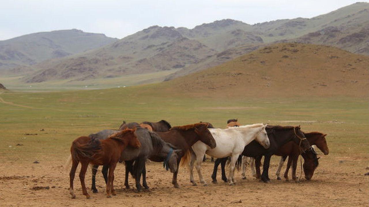 В зубы смотрят: в Монголии найдены древнейшие свидетельства лошадиной стоматологии