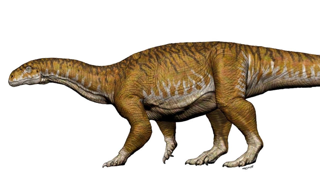 """""""Первый огромный"""": в Аргентине найдены останки древнего предка гигантских ящеров"""