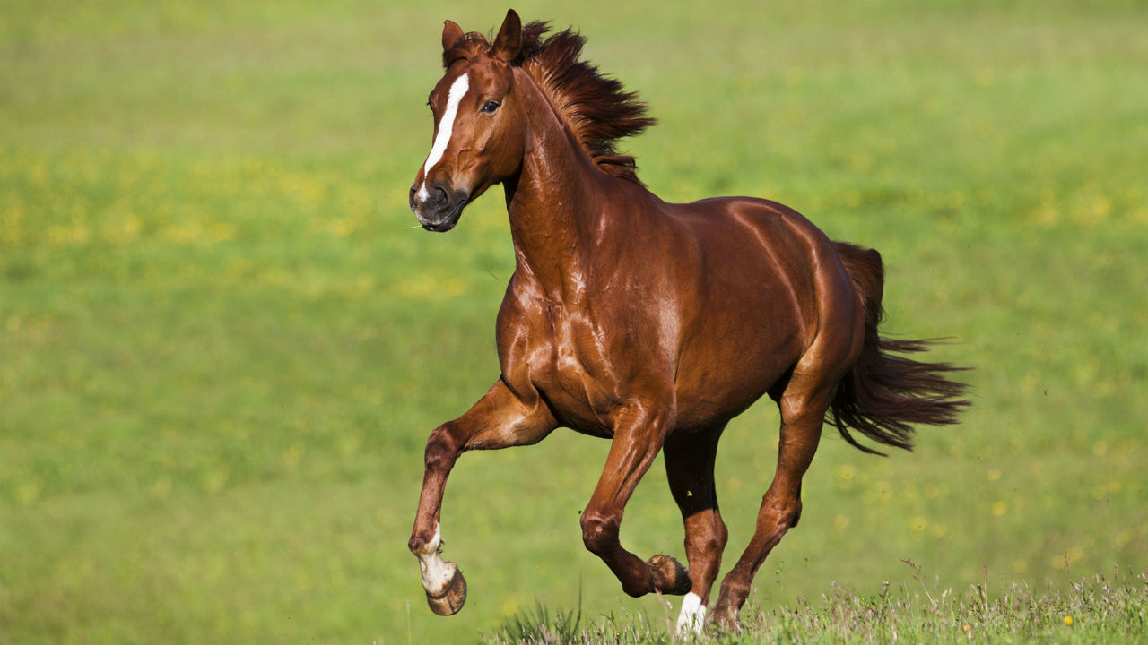Лошади издают забавный звук, когда счастливы