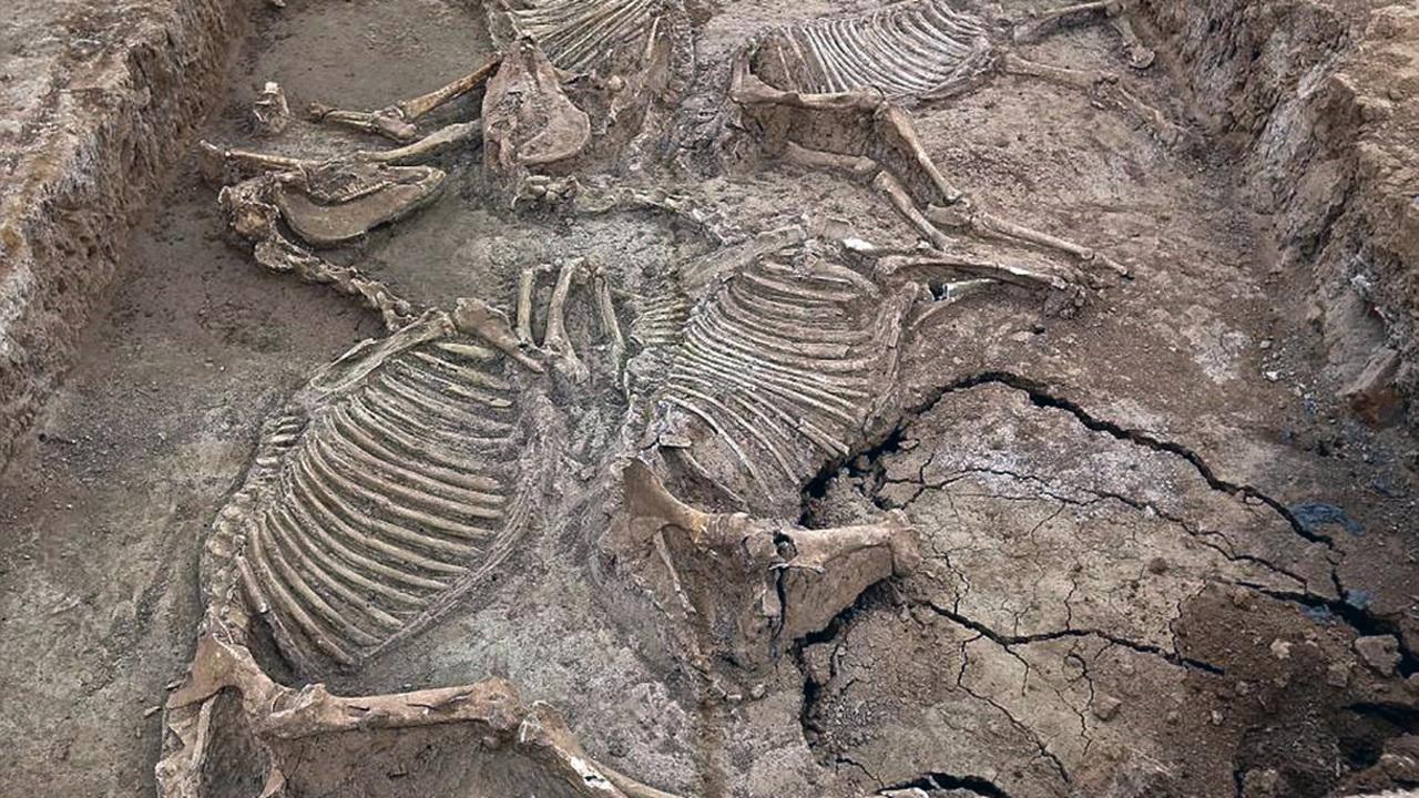 Лошади, бронза и саркофаги: в Китае обнаружили 2700-летний некрополь эпохи Вёсен и Осеней