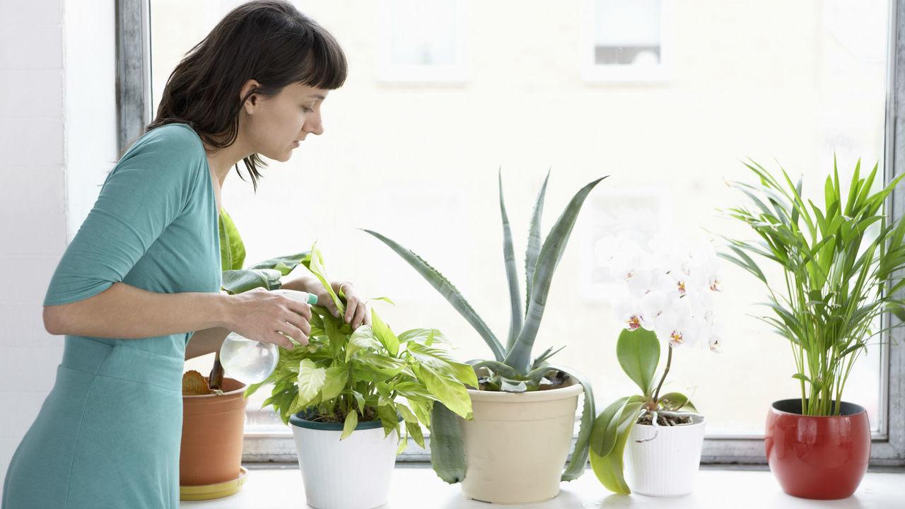 Комнатные растения научат обнаруживать в домах опасные газы и плесень