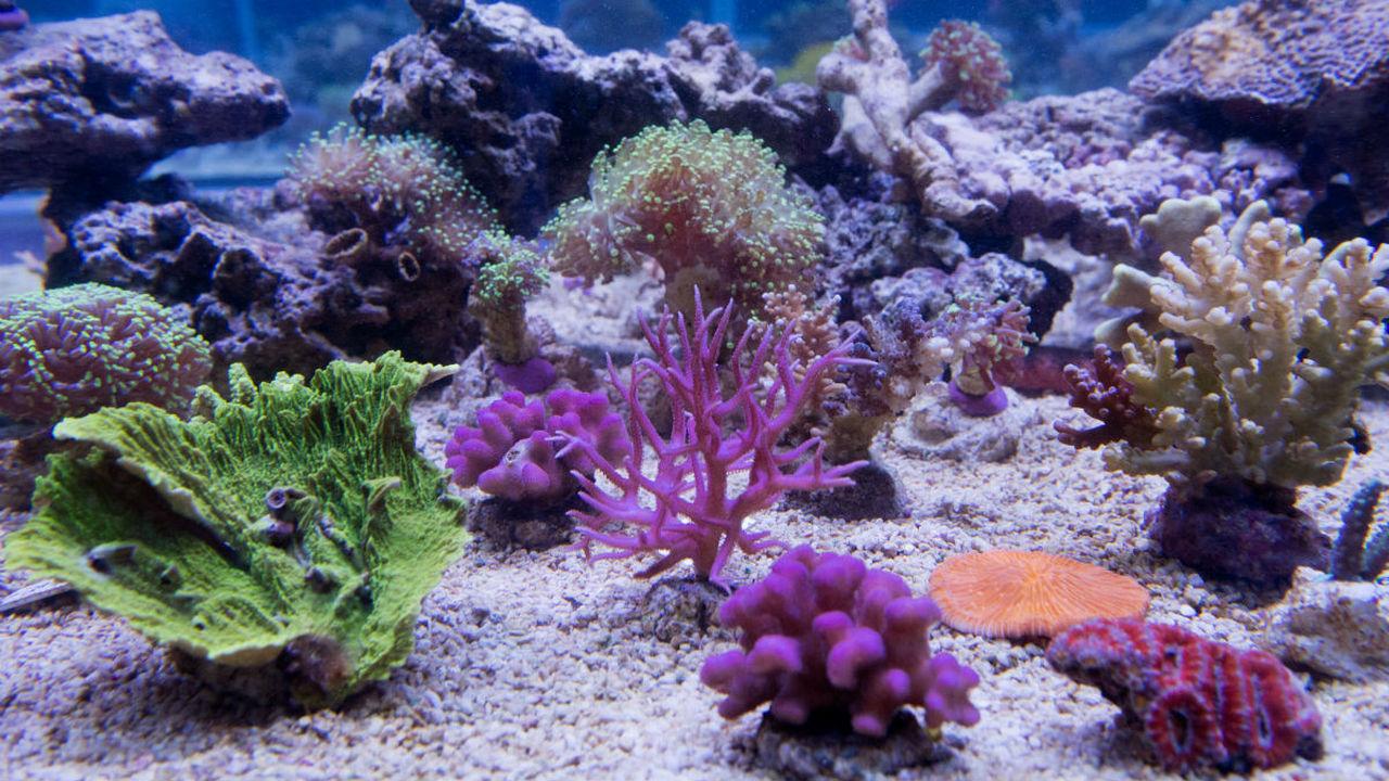 160 миллионов лет дружбы: в морях обнаружились живые свидетели мезозоя