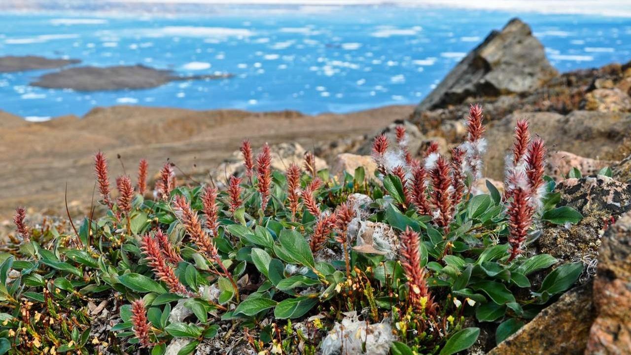 Экологи: растения захватывают потеплевшую Арктику