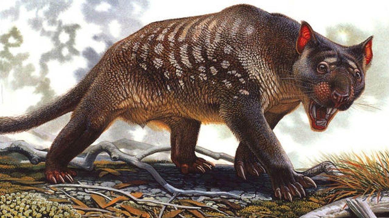 Палеонтологи нашли ответ на вопрос, кто уничтожил всех сумчатых львов