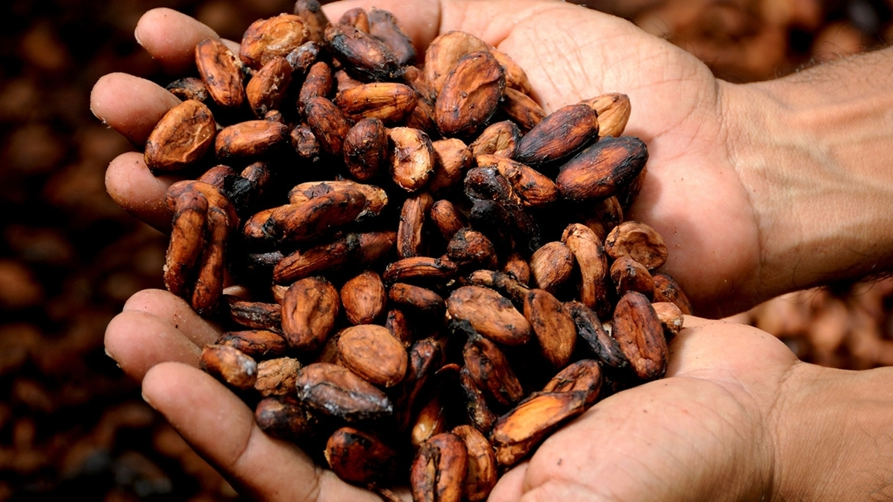 """Первыми """"шоколатье"""" оказались не майя: учёные переписали историю фаворита сладкоежек"""