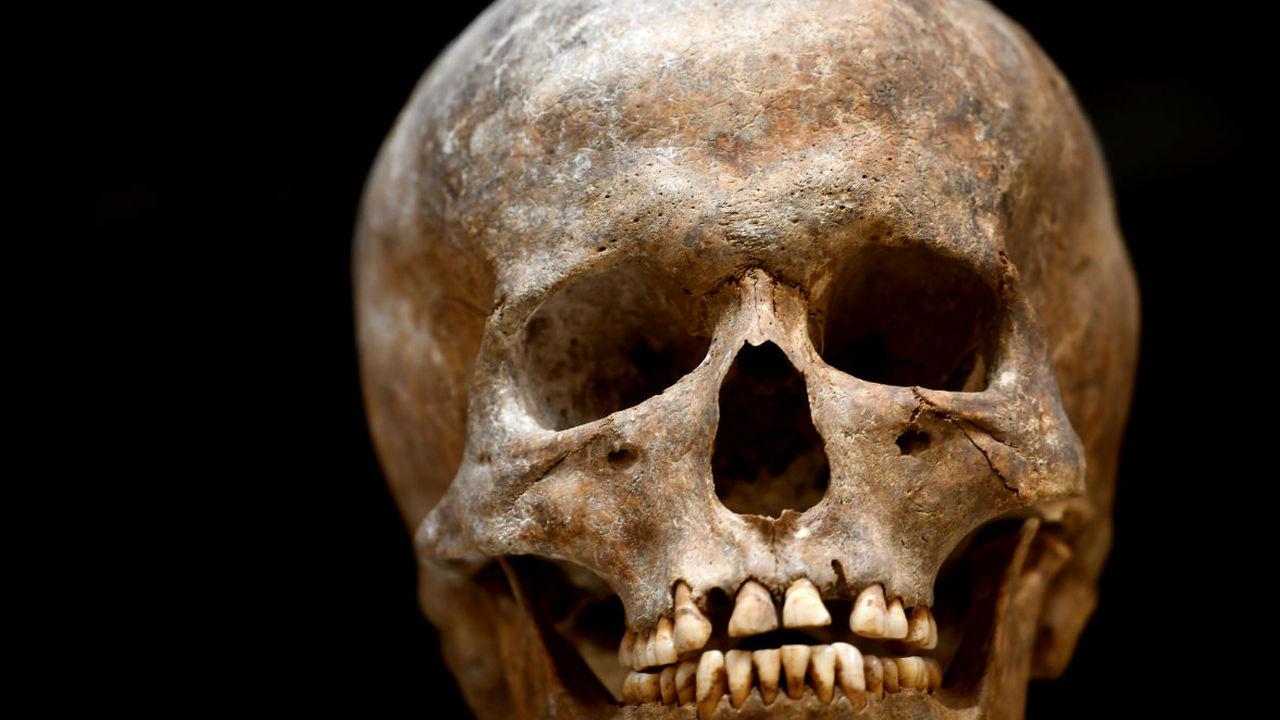 Археологи научились определять пол человека по зубам
