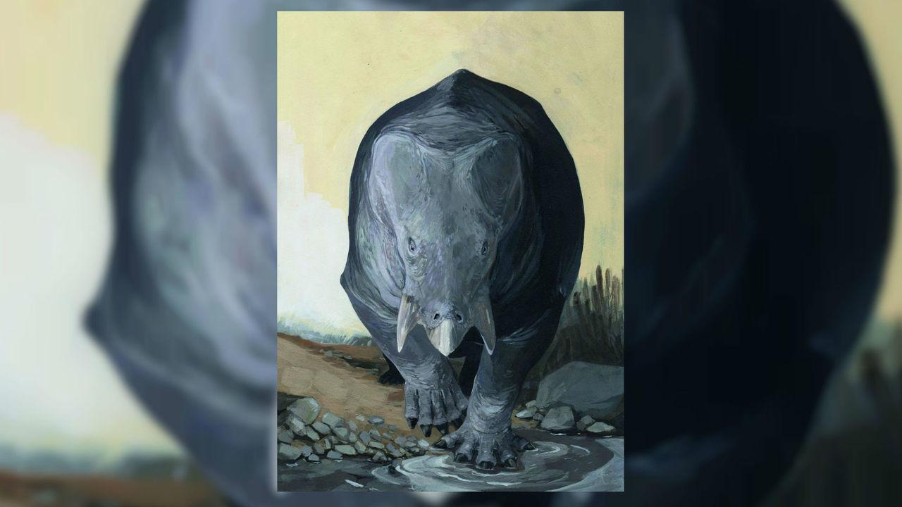 Помесь носорога и черепахи: найдены останки древнего гигантского дицинодонта