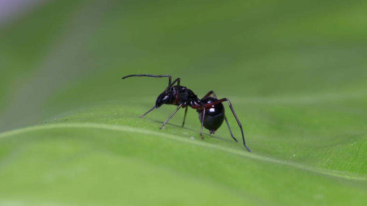Не только млекопитающие: некоторые пауки кормят своих детёнышей молоком