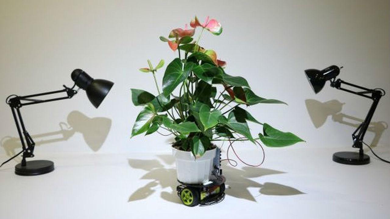 Растение-киборга научили передвигаться к источнику света