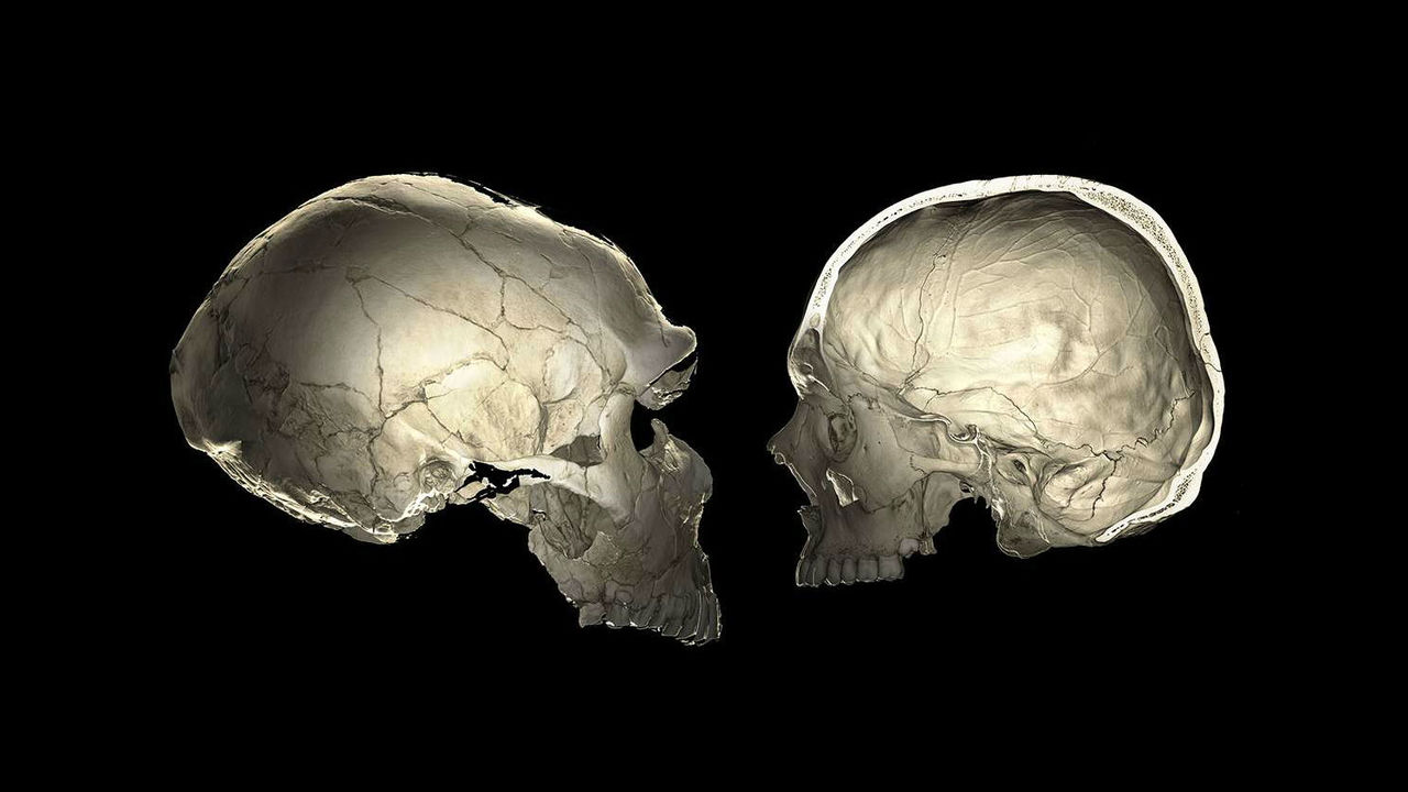 Неандертальские гены дали ключ к пониманию эволюции человеческого мозга