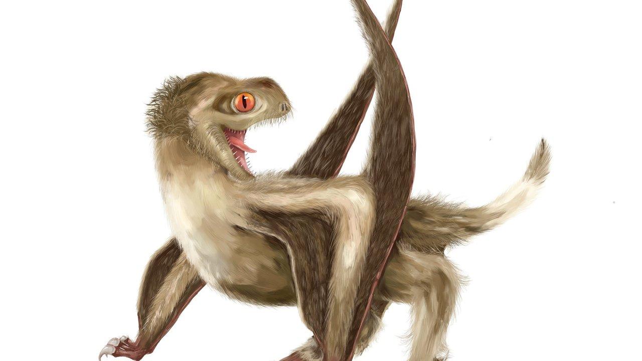 Древних летающих ящеров украшали перья, как у динозавров