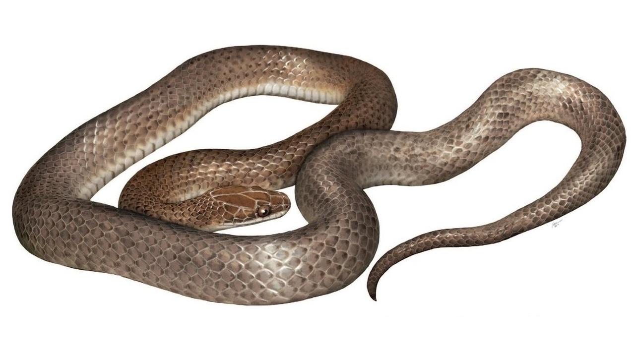 Два в одном: учёные обнаружили змею нового вида в другой змее