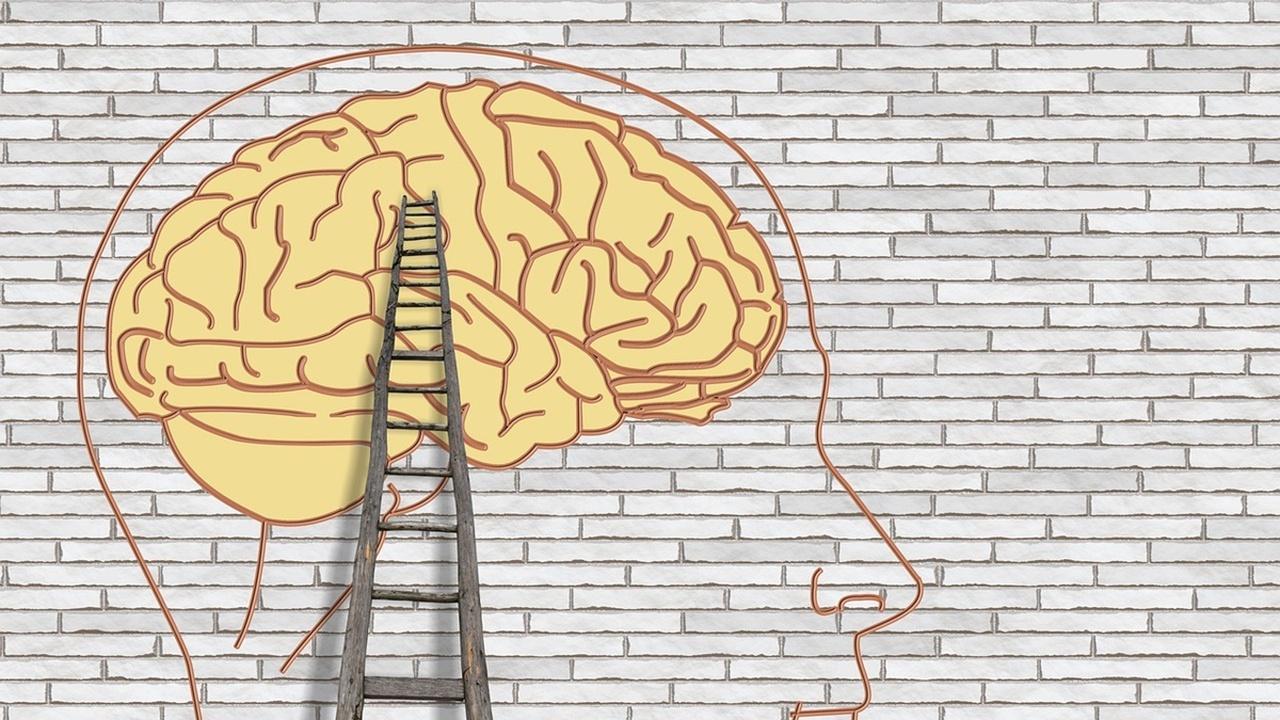 Одиннадцать фактов, которые мы узнали о человеческом мозге в 2018 году