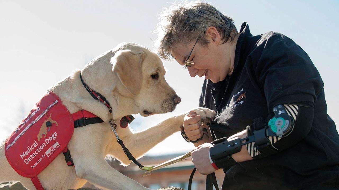 Хвостатый нянь: собаки-нюхачи помогут диабетикам контролировать уровень глюкозы