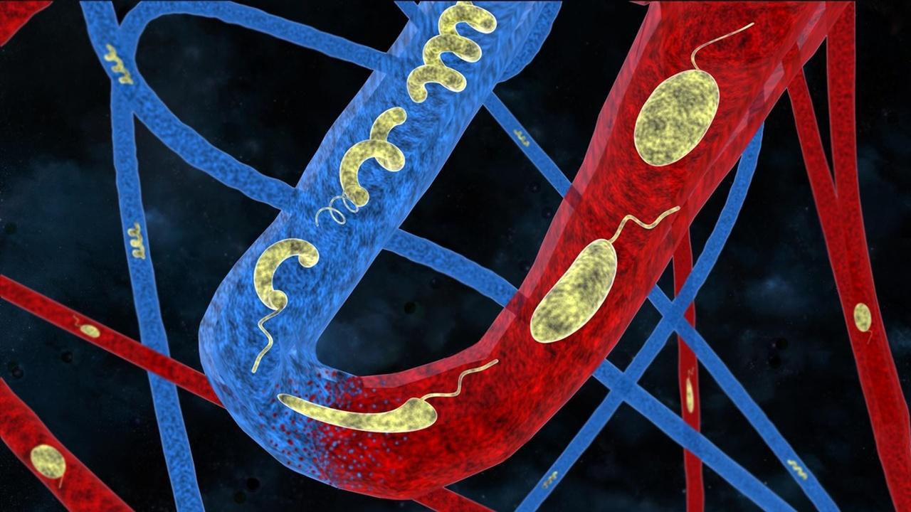 Микроботов для доставки лекарств научили менять форму в разной среде