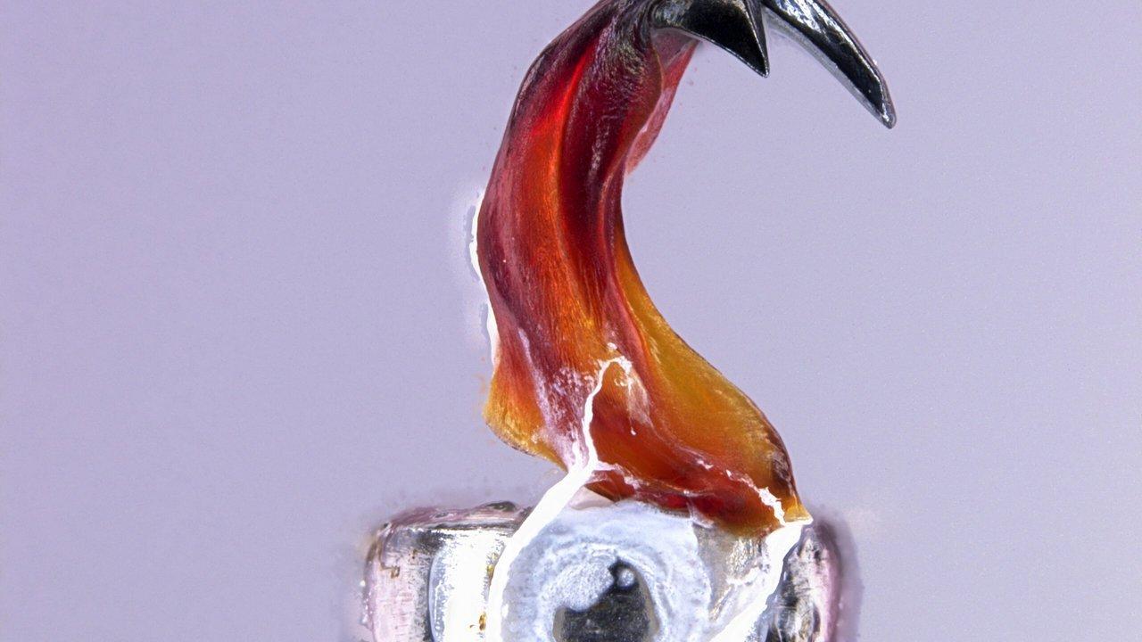 Разгадана загадка самых твёрдых в мире зубов