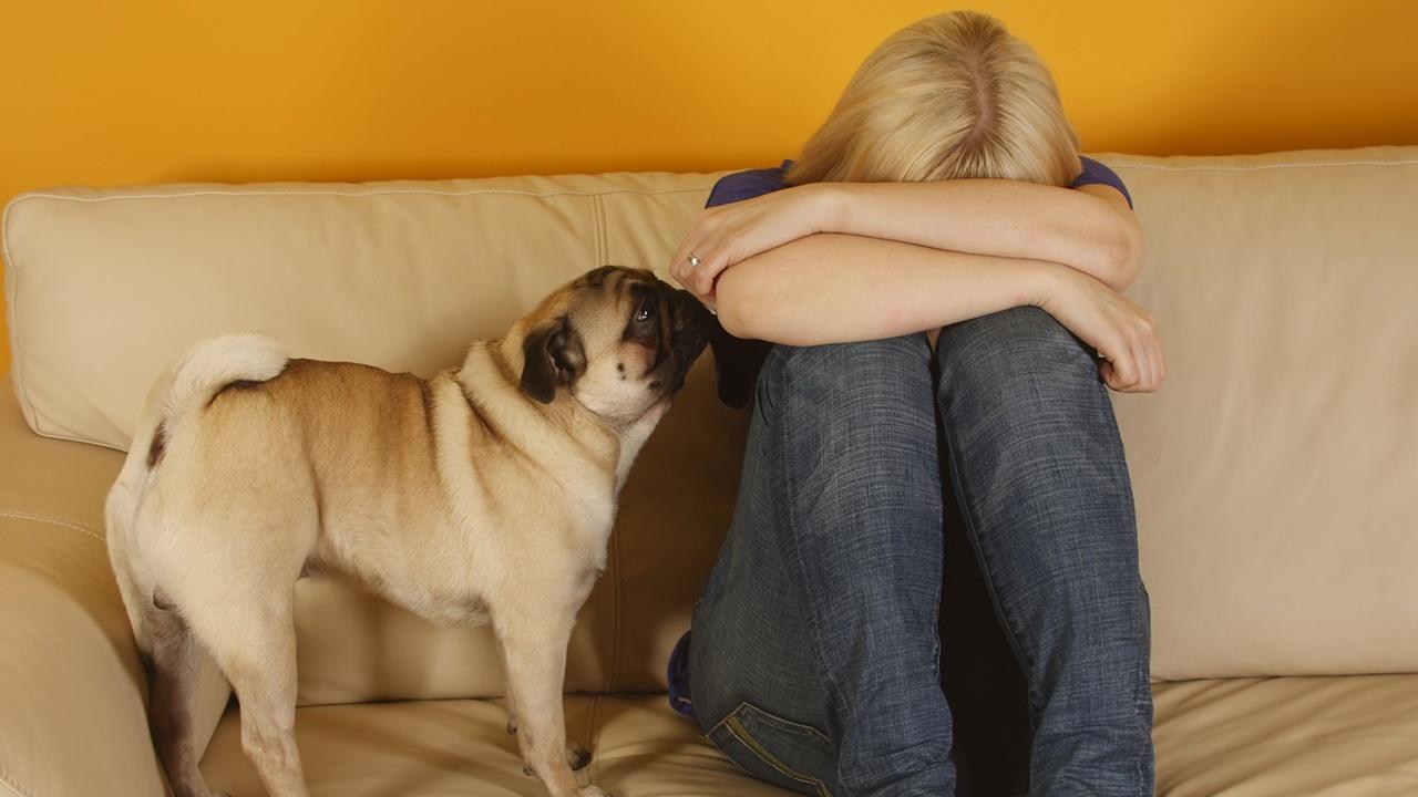 Кишечные бактерии могут защищать людей от депрессии