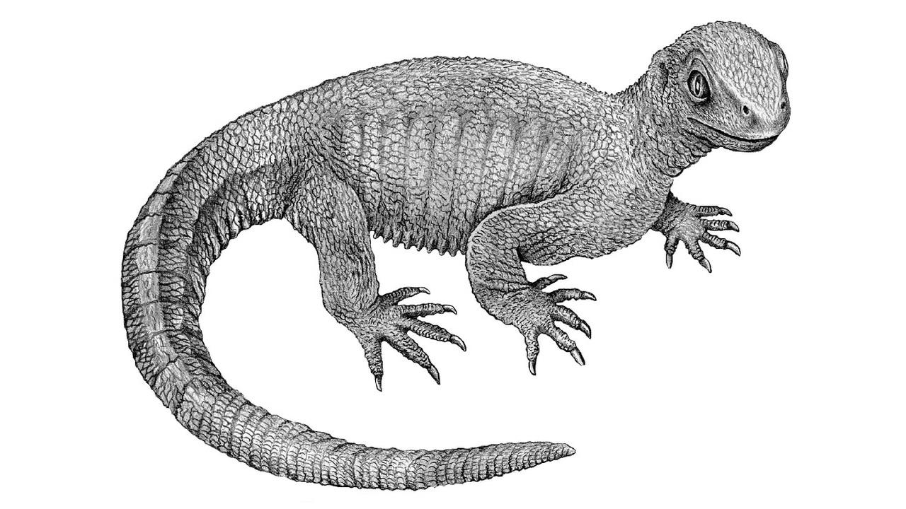 """У """"дедушки черепах"""" возрастом 240 миллионов лет диагностирован рак кости"""