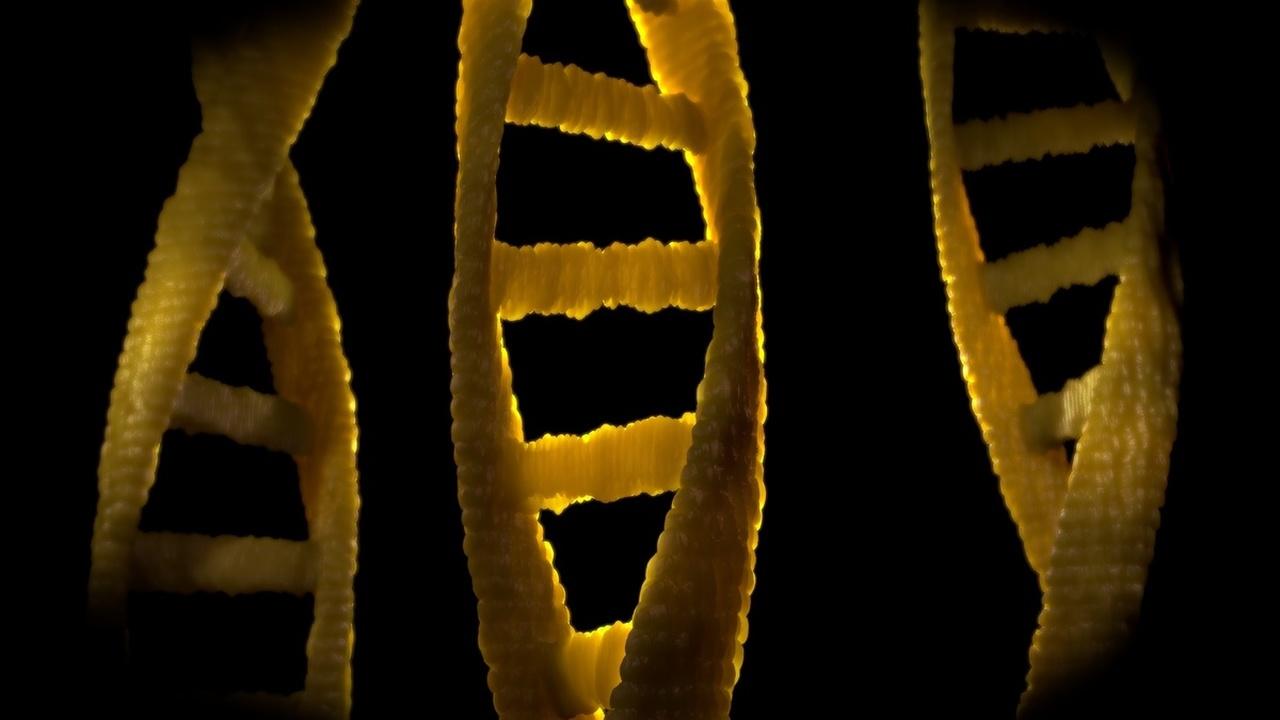 """Создан """"CRISPR-шредер"""" для измельчения рекордно длинных участков ДНК"""