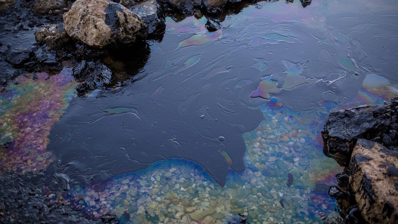 На дне Марианской впадины найдены бактерии, питающиеся нефтью