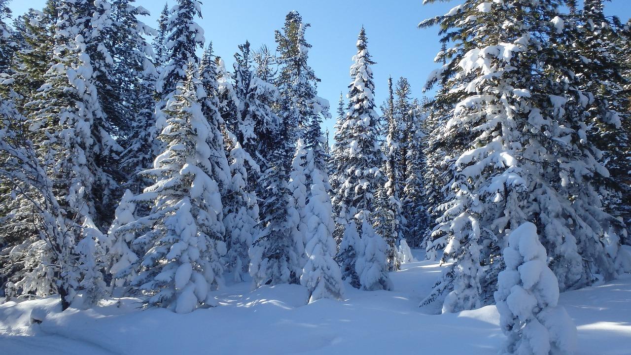 Глобальное потепление сделает Сибирь почти курортом