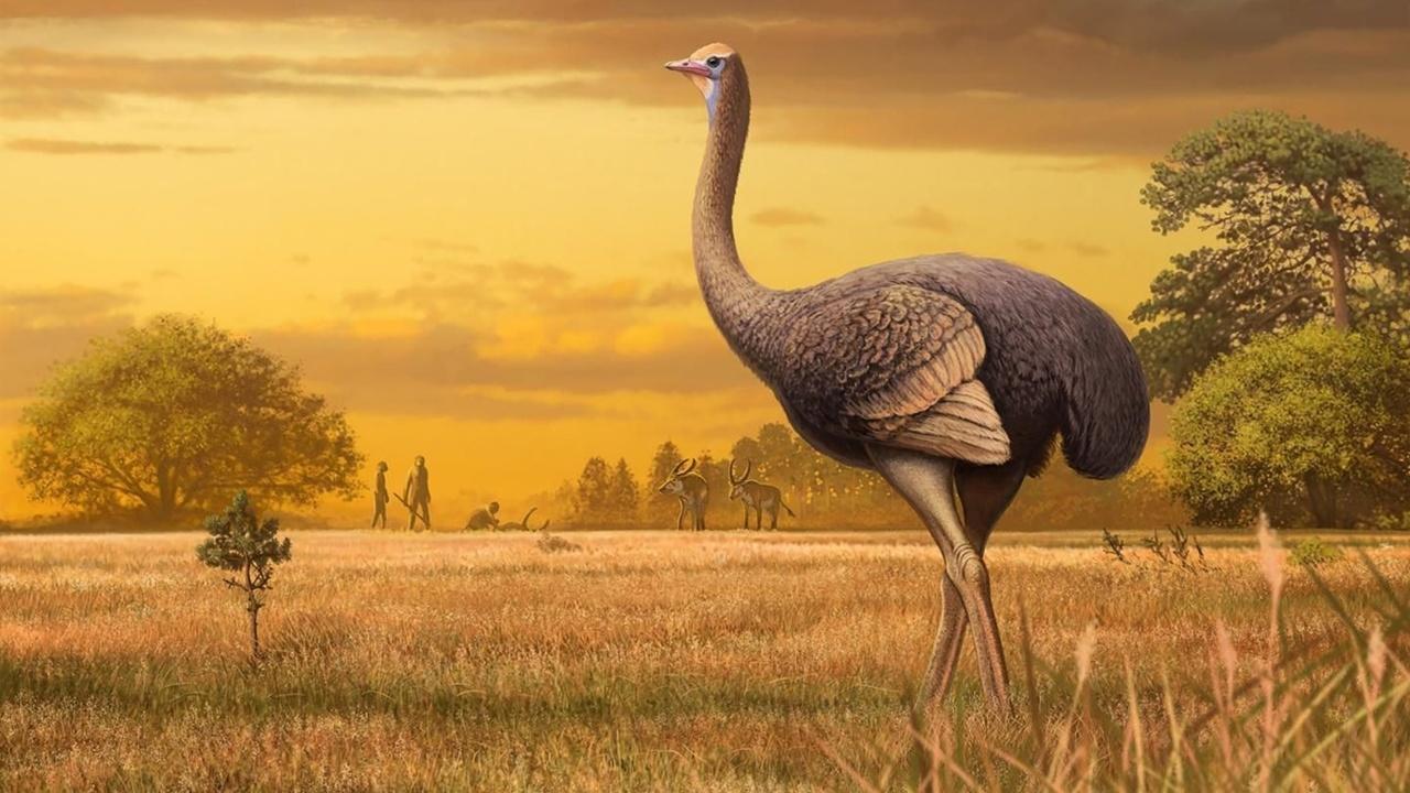 В крымской пещере найдены останки ископаемой птицы-великана – самой крупной в Северном полушарии