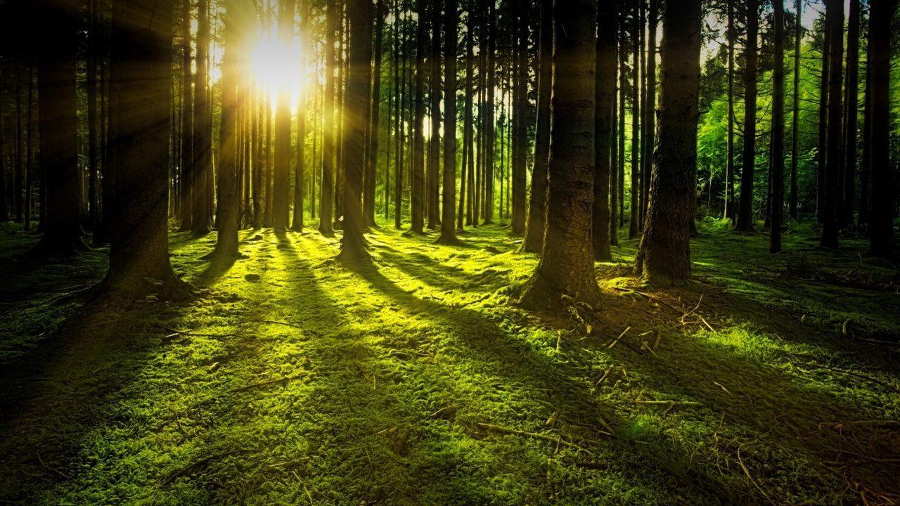 Учёные: Землю от парникового эффекта спасёт триллион новых деревьев