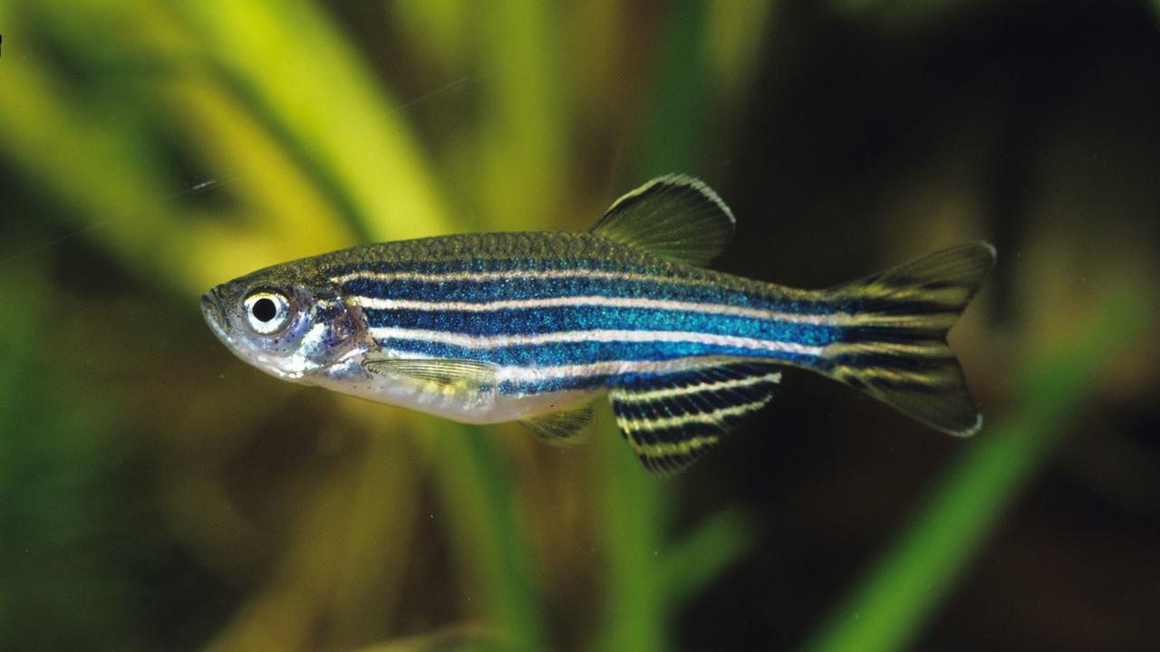 Новое открытие: рыбы тоже видят сны?