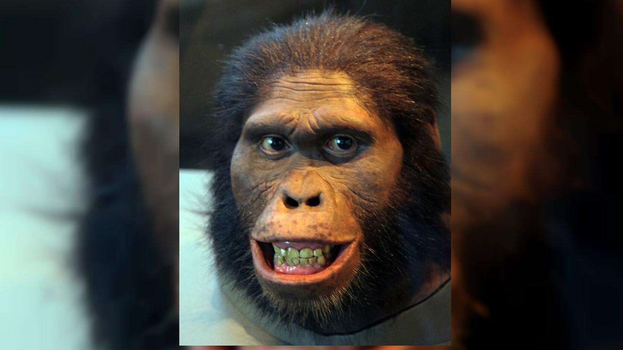 Окаменелые зубы раскрыли секреты материнства далёких родственников человека