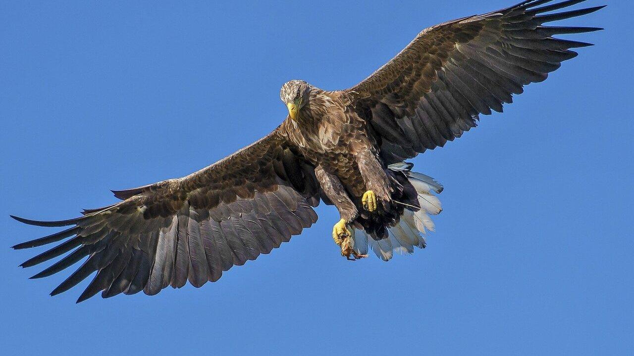 Учёные выяснили, что птицам с тёмным оперением летать легче