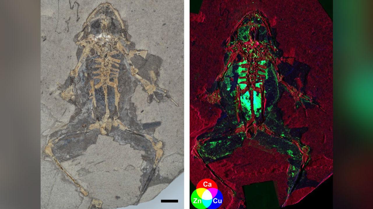Анатомию древних животных восстановят с невероятной точностью при помощи нового метода