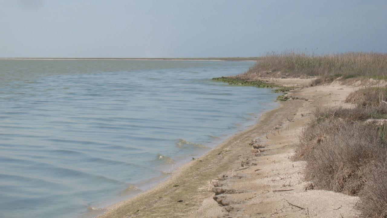 В гиперсолёной воде Гнилого моря одни животные погибают, а другие процветают