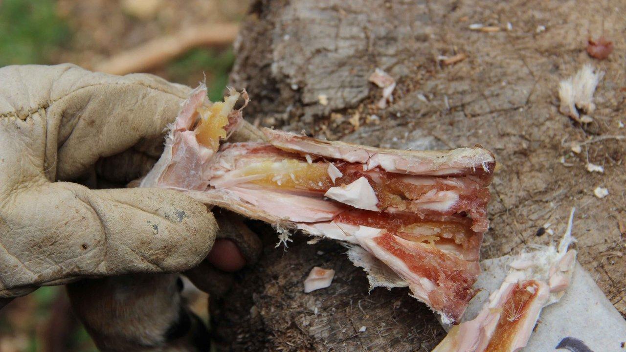 Доисторические консервы: как древние люди хранили костный мозг 400 тысяч лет назад