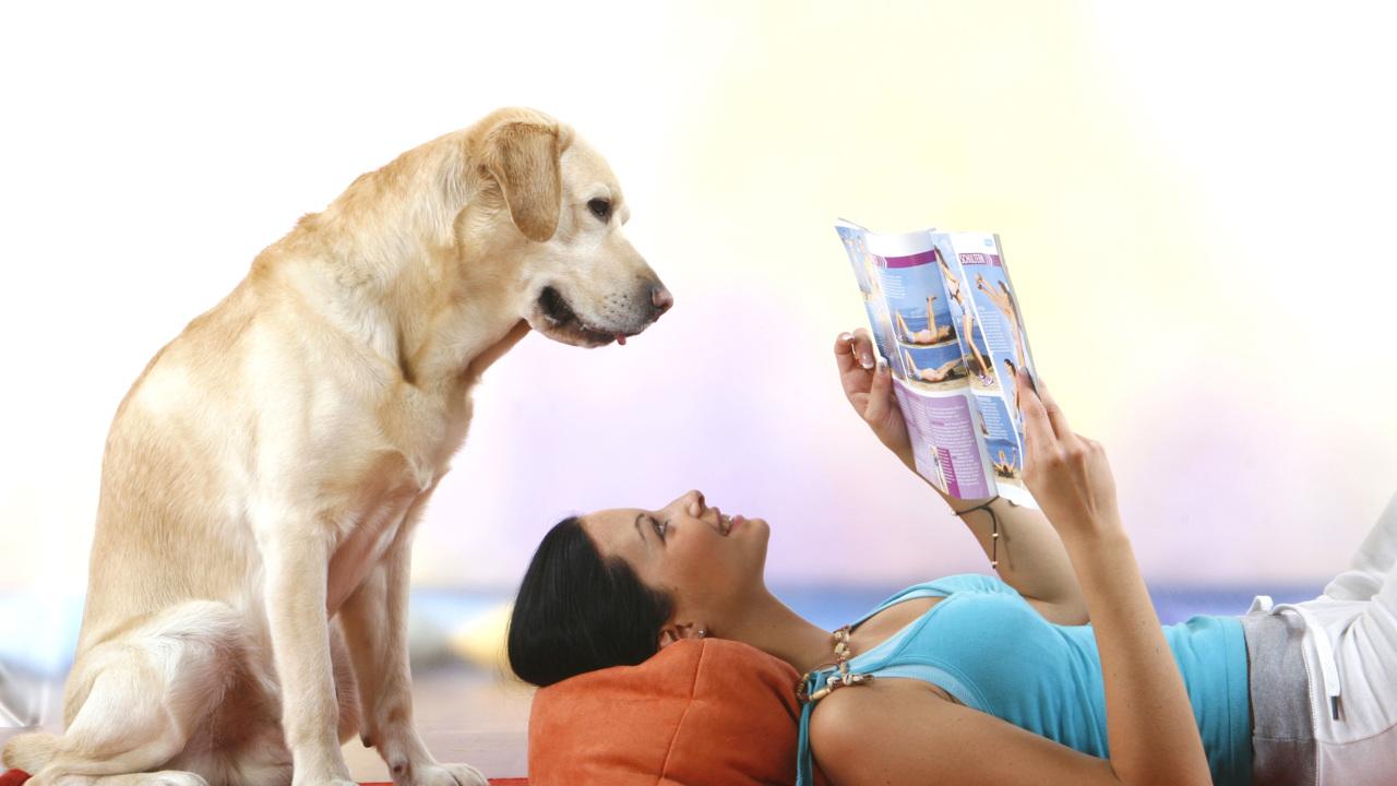 """""""Кто тут умный мальчик?"""": собаки понимают даже тонкие различия в словах"""