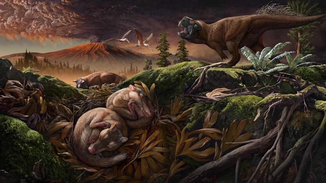Жевание у млекопитающих отделилось от слуха ещё в мезозое