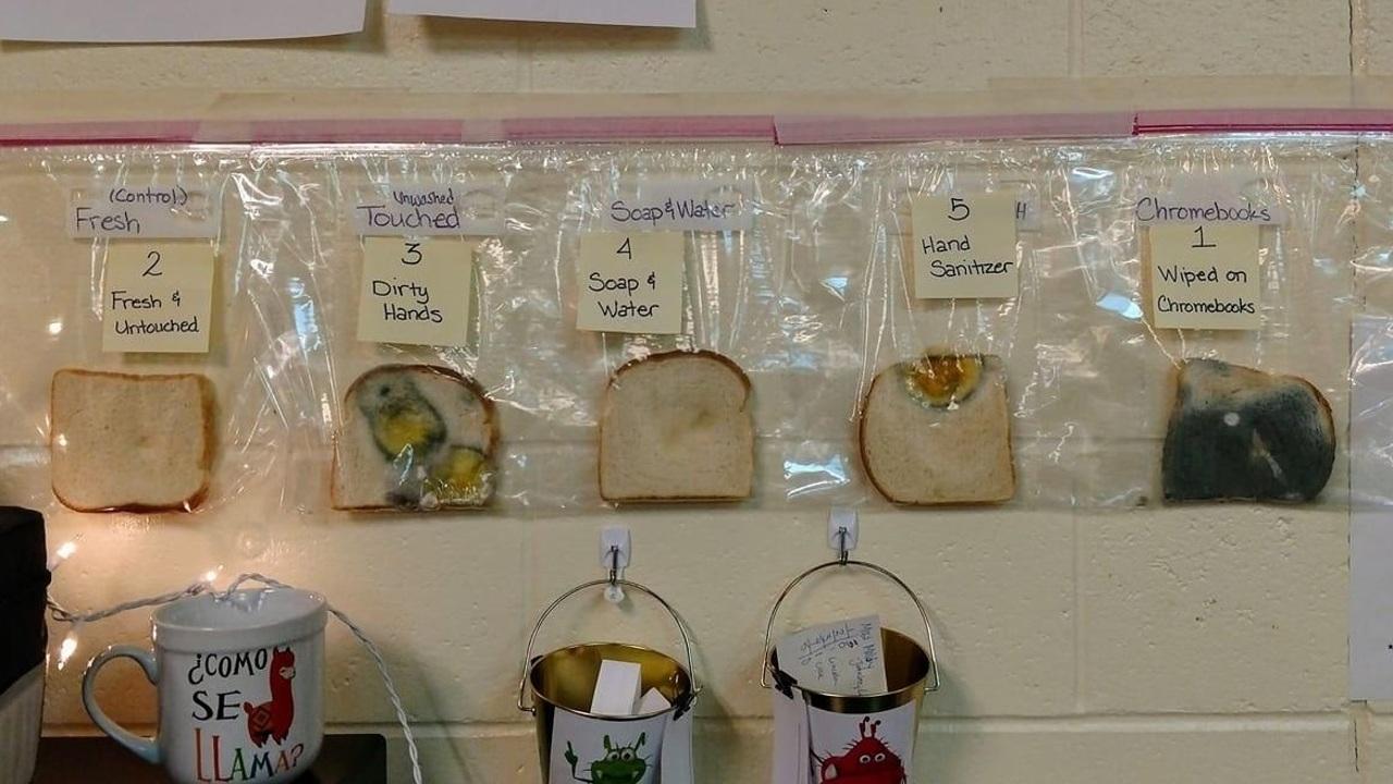 """Приучить детей мыть руки поможет """"хлебный эксперимент"""""""