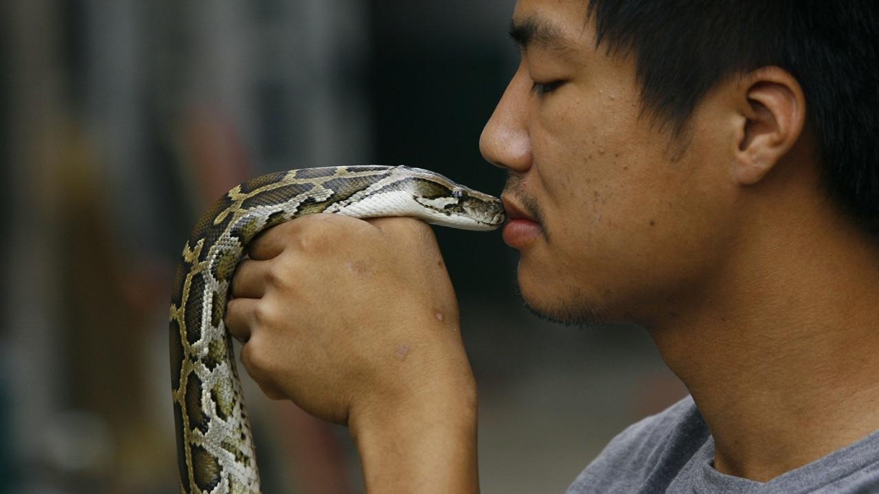Китайский коронавирус оказался гибридным и передался людям от змей