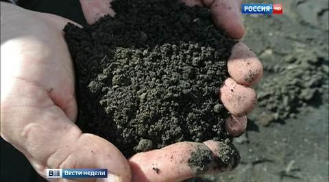 Воронежская область: секрет черного бриллианта и ягодное импортозамещение
