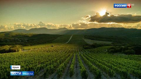 Крымское виноделие переживает ренессанс
