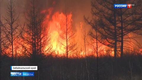 В Забайкалье огонь уничтожил более 11 тысяч гектаров леса