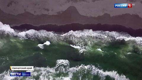 Вести в 20:00. Следов техногенного загрязнения нет: животные у побережья Камчатки могли погибнуть из-за кислородного голодания