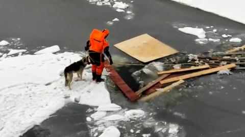 Видео из Сети. Потерявшуюся во Всеволожске собаку нашли на льдине в Кронштадте